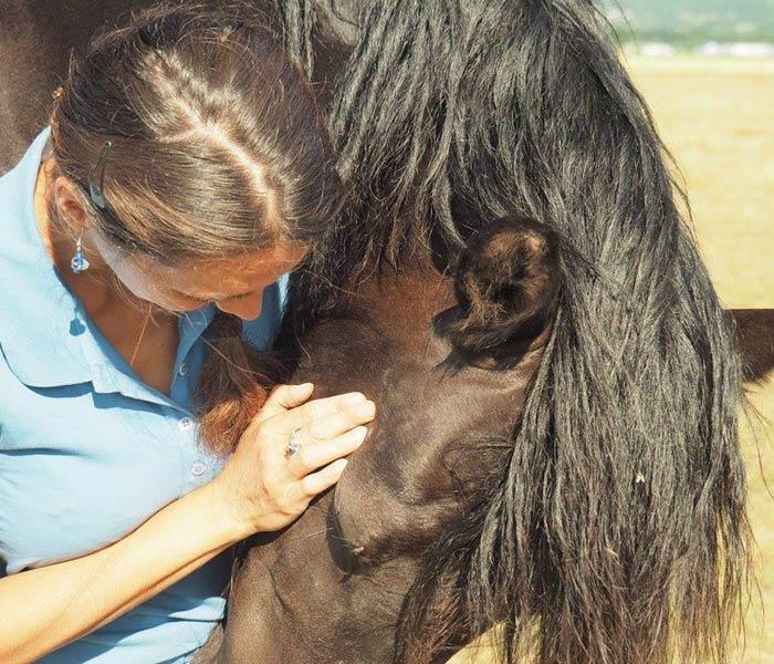 soin du cheval