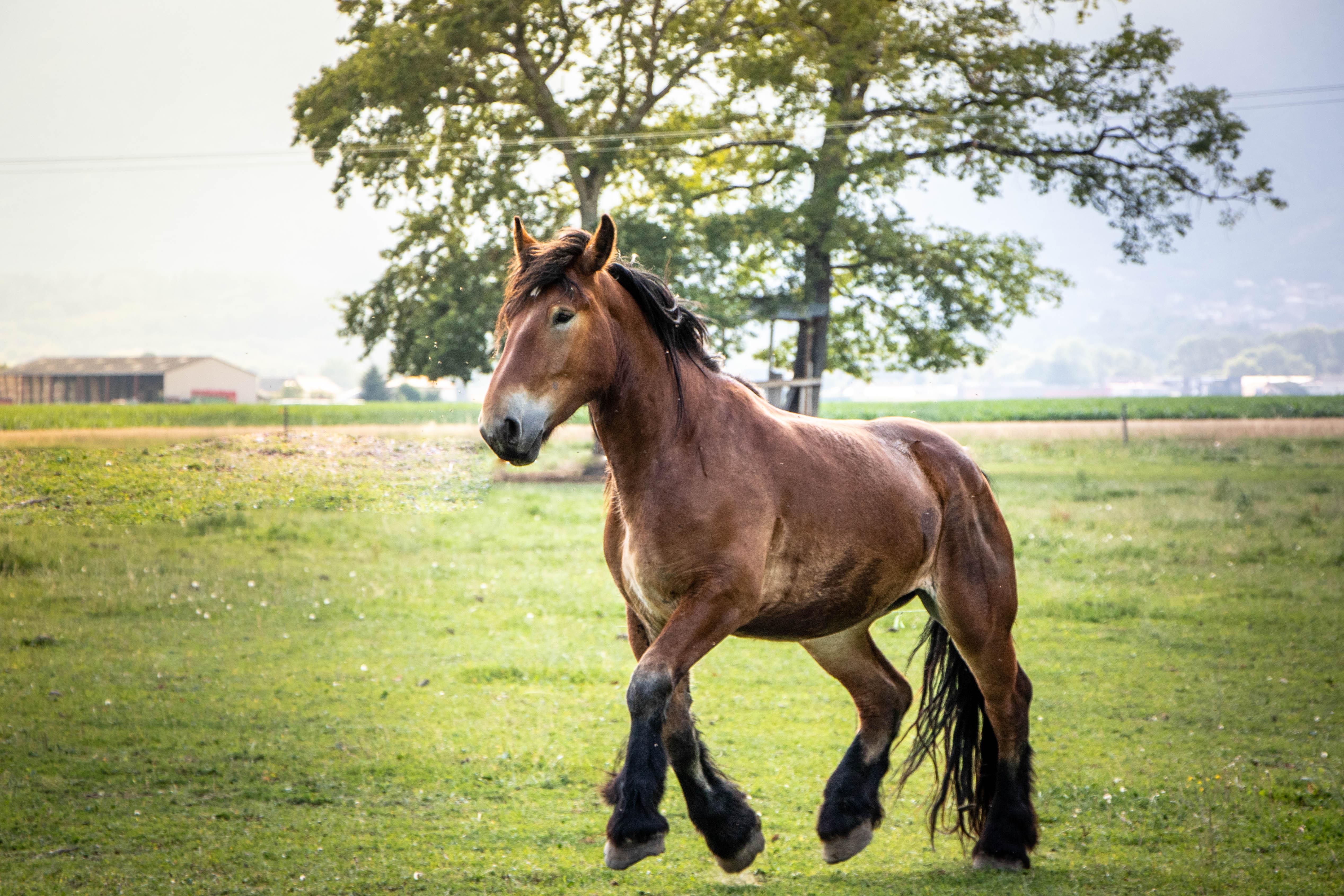 cheval qui galope